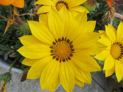 friday morning flora 010